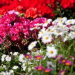 Kukat ja taimet